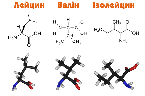ВСАА (англ: branched-chain amino acids, амінокислоти з розгалуженими ланцюжками) – зв'язка з трьох необхідних організму амінокислот, таких, як лейцин, валін та ізолейцин
