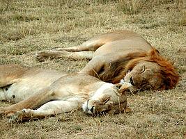 Сон і його важливість для всього організму