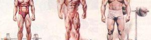 Три типи тілобудови